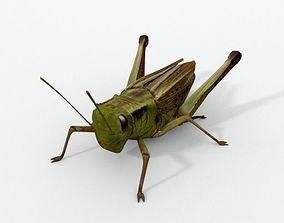 Grasshopper 3D asset