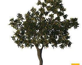 Sketchup Tree 04 3D