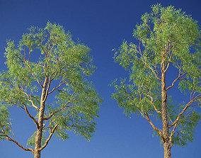 XfrogPlants Eucalyptus Mini Pack 3D PBR