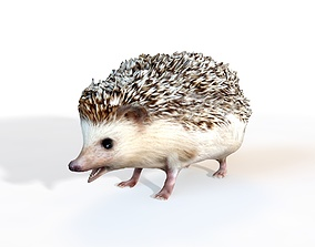 Hedge Hog Rigged 3D model