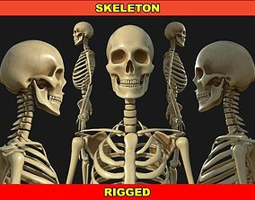 Rigged Human Skeleton 3D model VR / AR ready