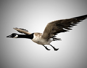 3D asset Canadian Goose low poly and rigged