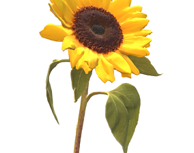 Fw6 - Sun Flower 3D model