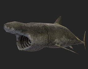 Low Poly Basking Shark 3D Model Animated - Game animated