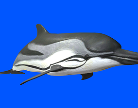 Dolphin 3D Model animated realtime