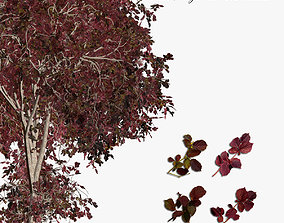 Tree Hazel red 01 3D