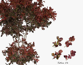 3D Hazelnut tree red