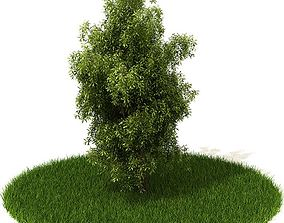 3D model Green Bushy Plant