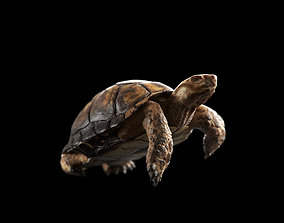 Turtle 3D asset rigged