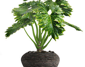 Philodendron 3D model