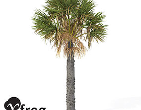 3D model XfrogPlants Palmetto 1