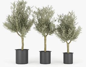 3D model vegetation Olive Tree
