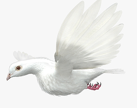 3D Dove - rigged - animated