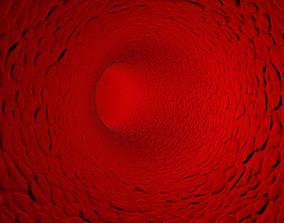 Inside Human Vein or Artery 3D model
