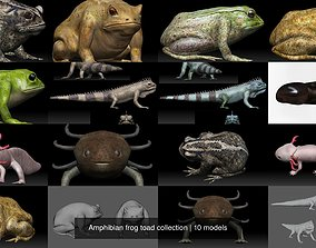 3D model Amphibian frog toad collection