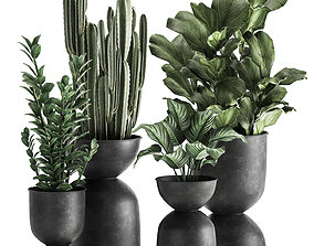 Houseplants in a pot for the interior 877 3D