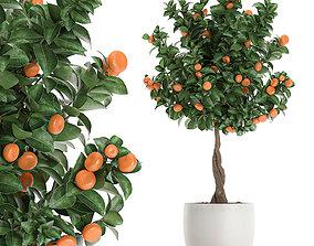 Citrus mandarin tree for the interior in white 3D model 1