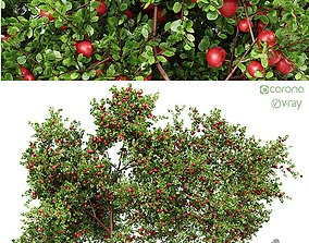 3D model 2 diffrent tree Apple fruit tree