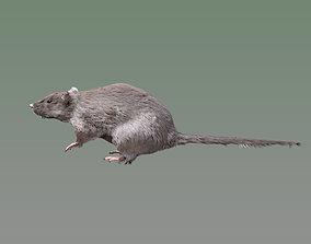 3D model Rat Rig
