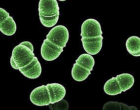 3D model Enterococcus