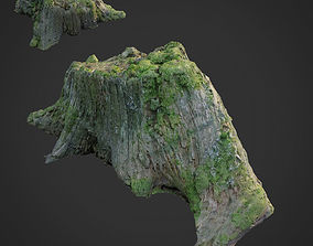 3d scanned nature tree stump 008 realtime