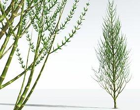 3D EVERYPlant Ridged Horsetail Tree 06 --12