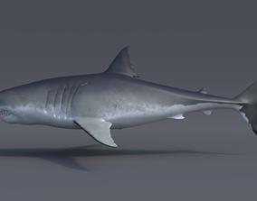 Great white shark - Carcharodon 3D model