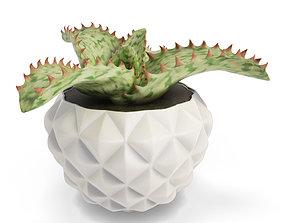 3D Interior Succulent Plant Aloe