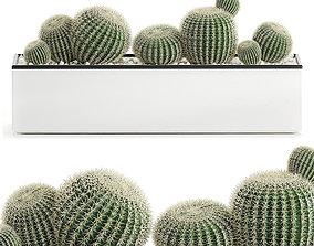 3D Decorative cactus in white pot for the interior 584
