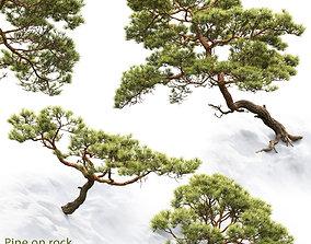 Pine On Rock 02 3D model