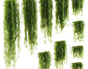Hanging plants for shelves 10 models