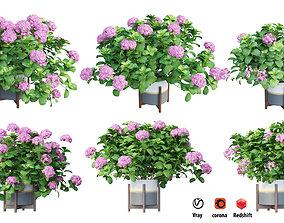 3D Plants Hydrangea set 06