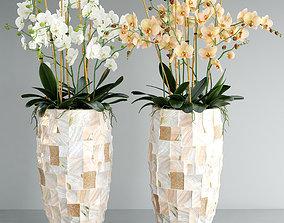 3D Orchid 5