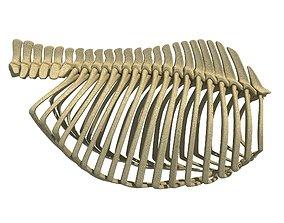 Detailed Bones of Animal Rib Cage 2 3D