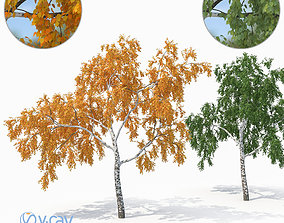 3D model Birch Tree No 2 Two seasons