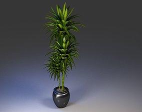Office Pot Plant 3D Model