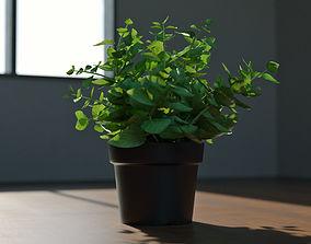 Decoration Plant 3D