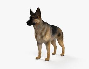 3D model German Shepherd HD