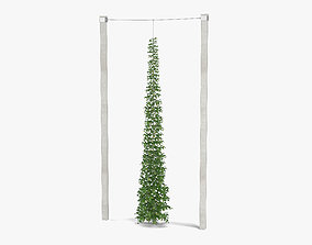 3D model vegetation Green Growing Hops