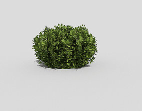 Shrub 3D asset low-poly
