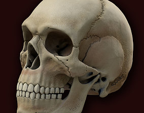 Ancient Skull 3D model