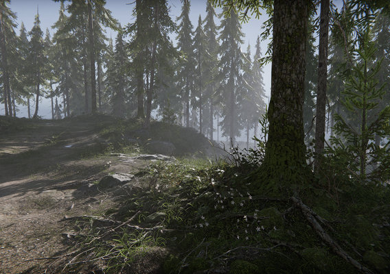Hazy Hills - Real-Time Forest Environment