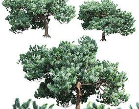 Pine 2 3D
