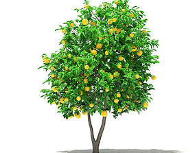 Grapefruit Tree with Fruits foliage 3D