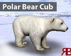 Polar Bear Cub 3D model