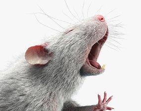 Rat Fur Rigged White 3D model