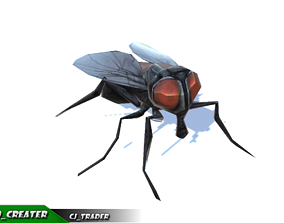 animated Low-Poly Housefly Insect Rigged Animated 3d model
