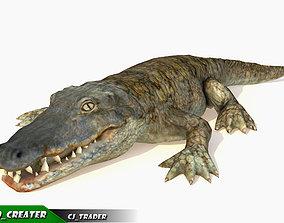 animated Crocodile Rig Animated LowPoly 3d