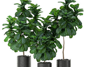 3D Plants collection 366
