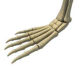Animal Feet Leg Skeleton 3D